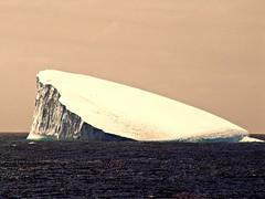 En route to Antarctica (katecphtank) Tags: penguin antarctica iceberg lpfloating