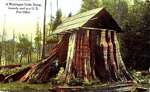 Stump House