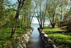 (Sameli) Tags: trees sea green nature water forest suomi finland landscape island helsinki pihlajasaari