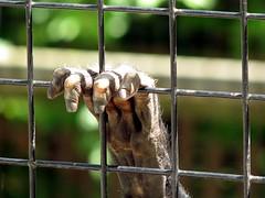 spidermonkey paw-PotterPark Zoo (Through Joanne's eye) Tags: animal zoo monkey paw bokeh michigan lansing potterparkzoo photofaceoffwinner pfogold