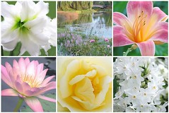 Happy Valentine's Day! (Cher12861 (Cheryl Kelly on ipernity)) Tags: floralcollage mosaic flowers blossoms blooms soft pastels lakescenefromchicagobotanicgarden waterlily rosemacro softness shadesofpastel nature beauty holiday