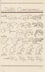 les animaux 60