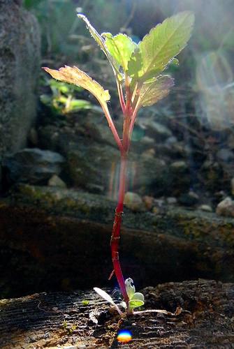 plants-010
