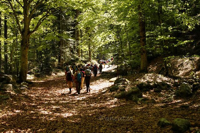 camminare nei boschi piemonte italia