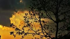 magic skies.. (mailyf) Tags: orange silhouette clouds golden skies shadows rizal antipolo gc100 flickrandroidapp:filter=none samsunggalaxycamera lorescountryhomes