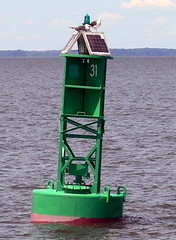 GREEN BUOY SOLAR LIGHT 31 on the Delaware Bay  ----   109 with 2 seagulls on top standing watch over the bay (Frozen in Time photos by Marianne AWAY OFF/ON) Tags: seagulls green seagull nautical 31 buoys buoy solarlight wateroceanslakesriverscreeks buoyant greenbuoy nationalgeographicwannabes ropesandnauticalthings delawarebaylighthouseadventure greenbuoysolarlight allthingsnautical nationalgeographiswannabes