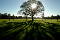 Tree (Rafal Bergman) Tags: uk morning autumn shadow sun tree fall wales britain south cardiff fields llandaff naturesfinest 35faves anawesomeshot