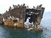 Dead Ferry