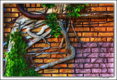 Urban Nature (KayCpics) Tags: urban nature wall stpetersburg bravo tampabay florida vivid orton flickrmeetup colorphotoaward aplusphoto diamondclassphotographer colourartaward platinumheartaward