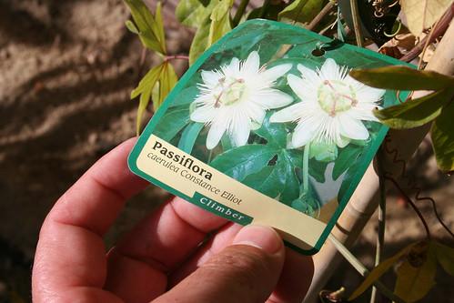 Passiflora - label