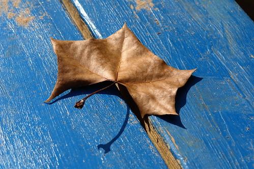 Leaf on Blue