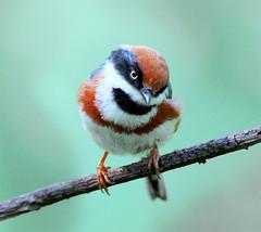 #175  (John&Fish) Tags: bird birding taiwan best 2007 birdwatcher naturesfinest flickraddicts naturescall ar1 specanimal abigfave anawe