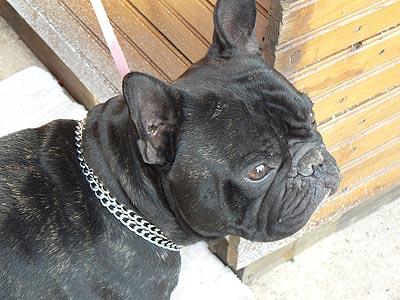 joli chien au marché de noel.jpg