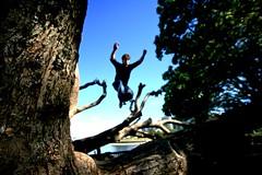 Tree monkey - by Tyson Cecka
