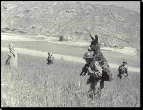 donkey bomb