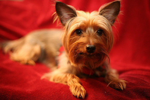 small dog breeds that don. Are there small dog breeds