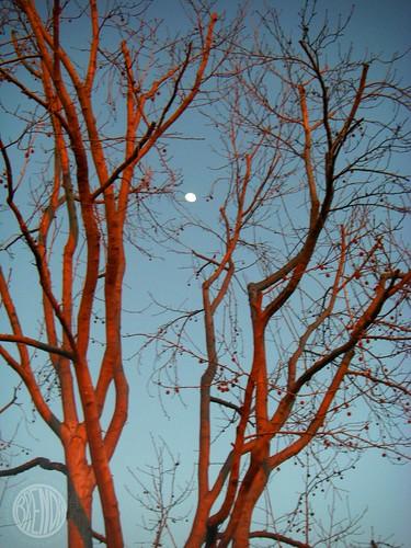 """pretty silver moon"""