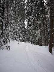 our exploration into the woods (JJ_LR) Tags: snowshoeing twinlakes snoqualmiepass