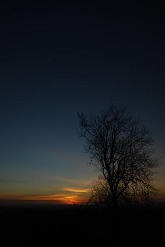 04. Wayward Tree