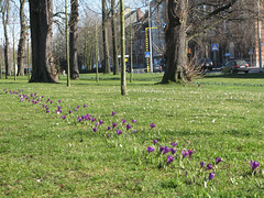 Bloeiend (CarolienC) Tags: leuven drieduizend lente krokus