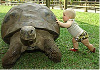 cute baby and Harriet, Darwin's tortoise