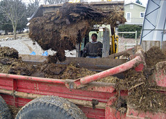 Filling the manure spreader