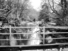 New Forest - Infrared (Chalkie_CC) Tags: trees water forest nikon hampshire infrared newforest pspro impressedbeauty chalkiecc onlythebestare coolestphotographers