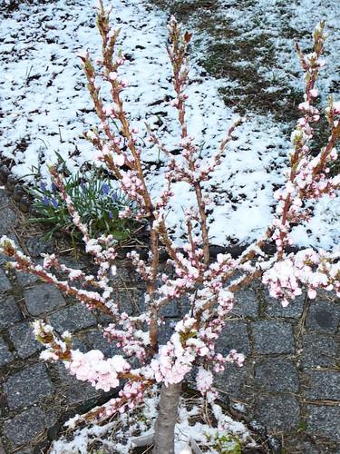 winterlicher Ostersonntag 2008 (04)