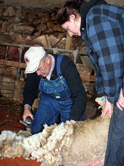 David Greene teaches a student how to shear