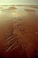 black holes (_oliverchank) Tags: usa beach d50 photography sand nikon oliver blind chank
