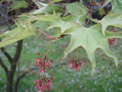 Tree Ident