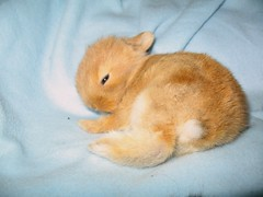 Week 3: Baby bunny (paularogala) Tags: cute rabbit bunny babies little sweet adorable newborn lovely
