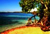 * Beach Calm * (*atrium09) Tags: travel tree beach venezuela olympus falcon orton tucacas morrocoy 10faves atrium09 rubenseabra