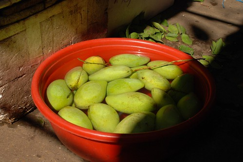 sunlight, green mango