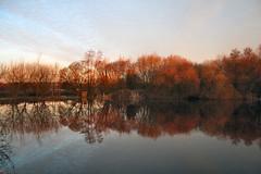 Lake reflection (torimages) Tags: somerset sd allrightsreserved ukenglandgreatbritainsomersetlevelssunriseearlymorningwinterfrostreallycoldorangeorangelightfrozenwaterreflection donotusewithoutwrittenconsent copyrighttorimages