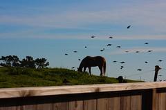 horse gets pestered