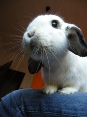 MILKA, BUNNY-SNOWFLAKE CLOSEUP (unaerica) Tags: italy hairy pet pets cute rabbit bunny bunnies nature beauty animals closeup fur outdoors nikon friend funny italia friendship princess sweet adorable fluffy happiness ears plush moustache occhi curious milka animali lapin tenderness coniglio cuccioli kanin coniglietto lopears orecchie unaerica coniglietta coniglietti theallamenta