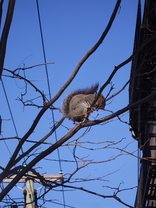 squirrel on a limb