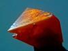 ammonium dichromate crystal (Sea Moon) Tags: orange crystal chemistry chemical bichromate dichromate chromate