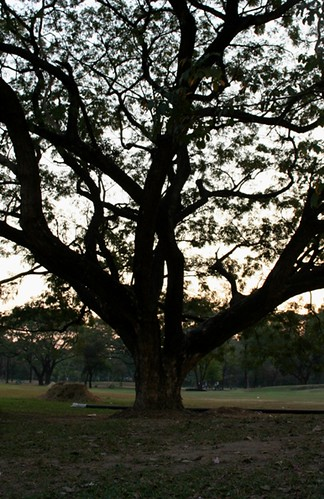 รูปภาพต้นไม้ใหญ่