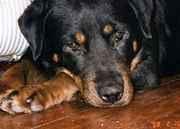 Kinship Circle - 2008-01-30 - January Gulf Coast Newsletter 10