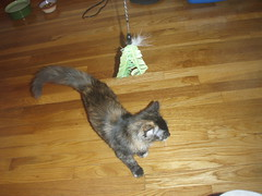 day two (catling42) Tags: animals kitties kaylee