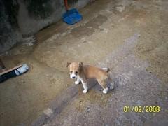 Mirella (Adoes G.A.T.A.) Tags: cachorro bichos filhote viralata srd cadela adoao animaldeestimaao
