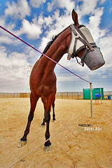 Horse (Nasser Bouhadoud) Tags: camera sky horse photoshop canon eos 350d sand view angle uncle wide 2006 arabic explore arab farmer 2008 could hdr nasser qatar jassim saher ناصر جاسم allil saherallil 432008 بوحدود