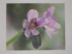 fiori aerografia