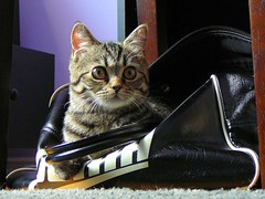 Cats Love Bags! (Lanamaniac) Tags: pet baby cute animal cat photography photo furry kitten feline fuzzy sweet stripes innocent young adorable kitty 45 kitteh months gatto koshka cutekitten adroable ksenya ksusha bestofcats lanamaniac lanamaniacphotography ksenya45months
