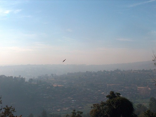 hawks flying over Kigali
