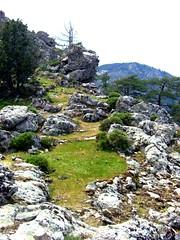 Point coté 1159 IGN vers Bocca di Felce en été