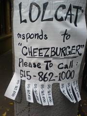 please help lost LOL cat find his home (bschmove) Tags: lost lol cheezburger lolcat