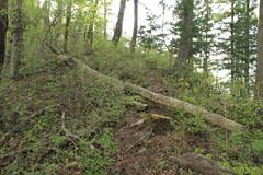 倒木のある箇所